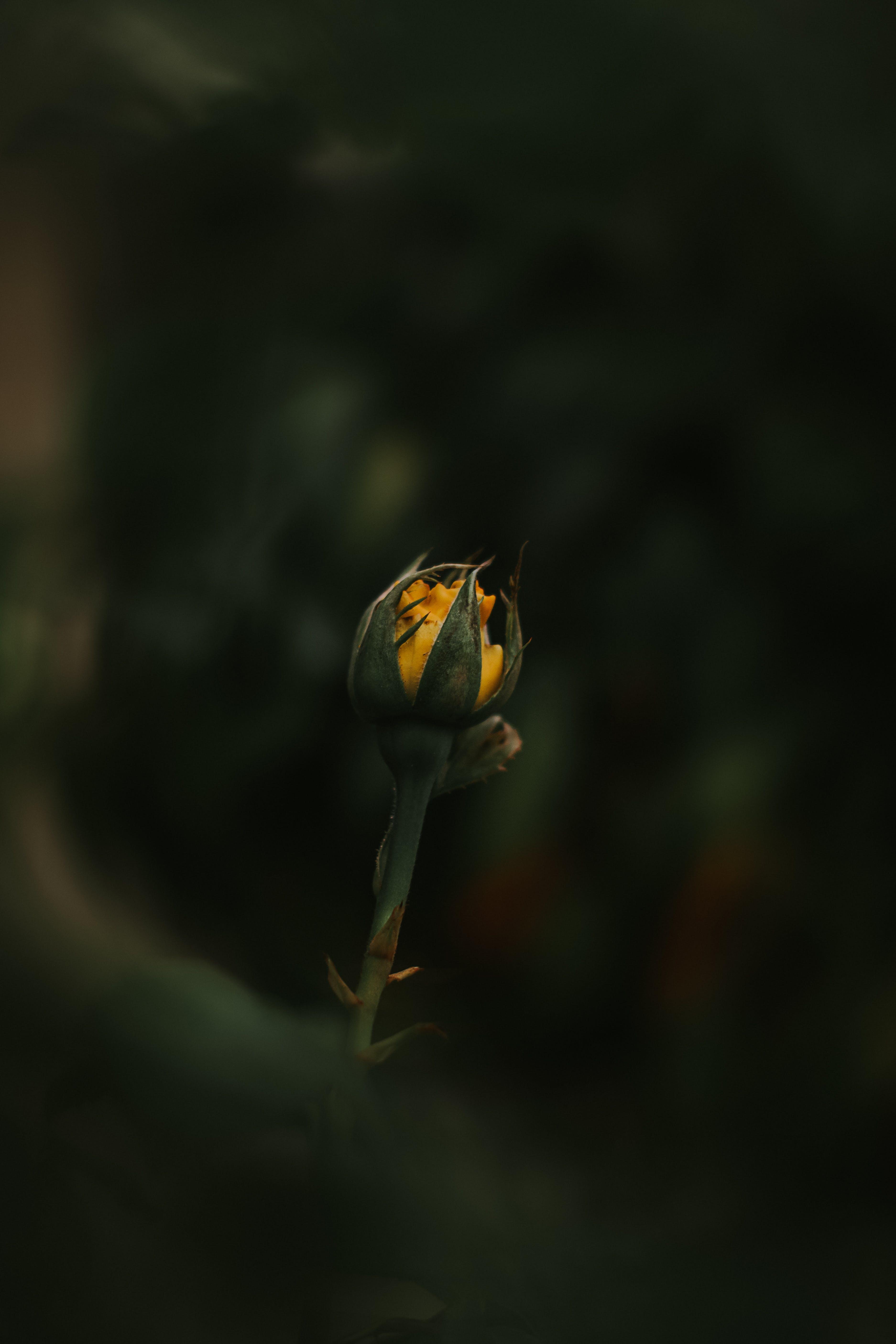 Darmowe zdjęcie z galerii z delikatny, flora, fotografia przyrodnicza, głębia pola