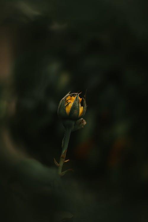 delikatny, flora, fotografia przyrodnicza