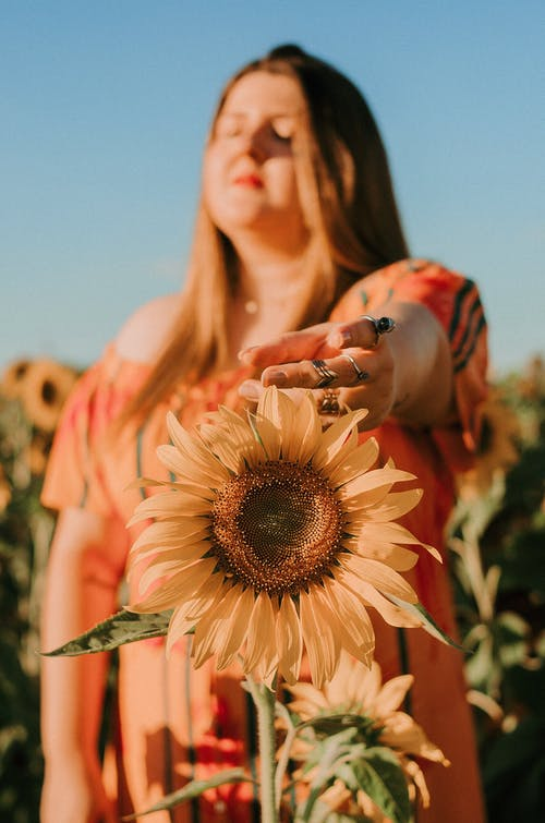 açık hava, alan derinliği, ayçiçeği, ayçiçeği tarlası içeren Ücretsiz stok fotoğraf