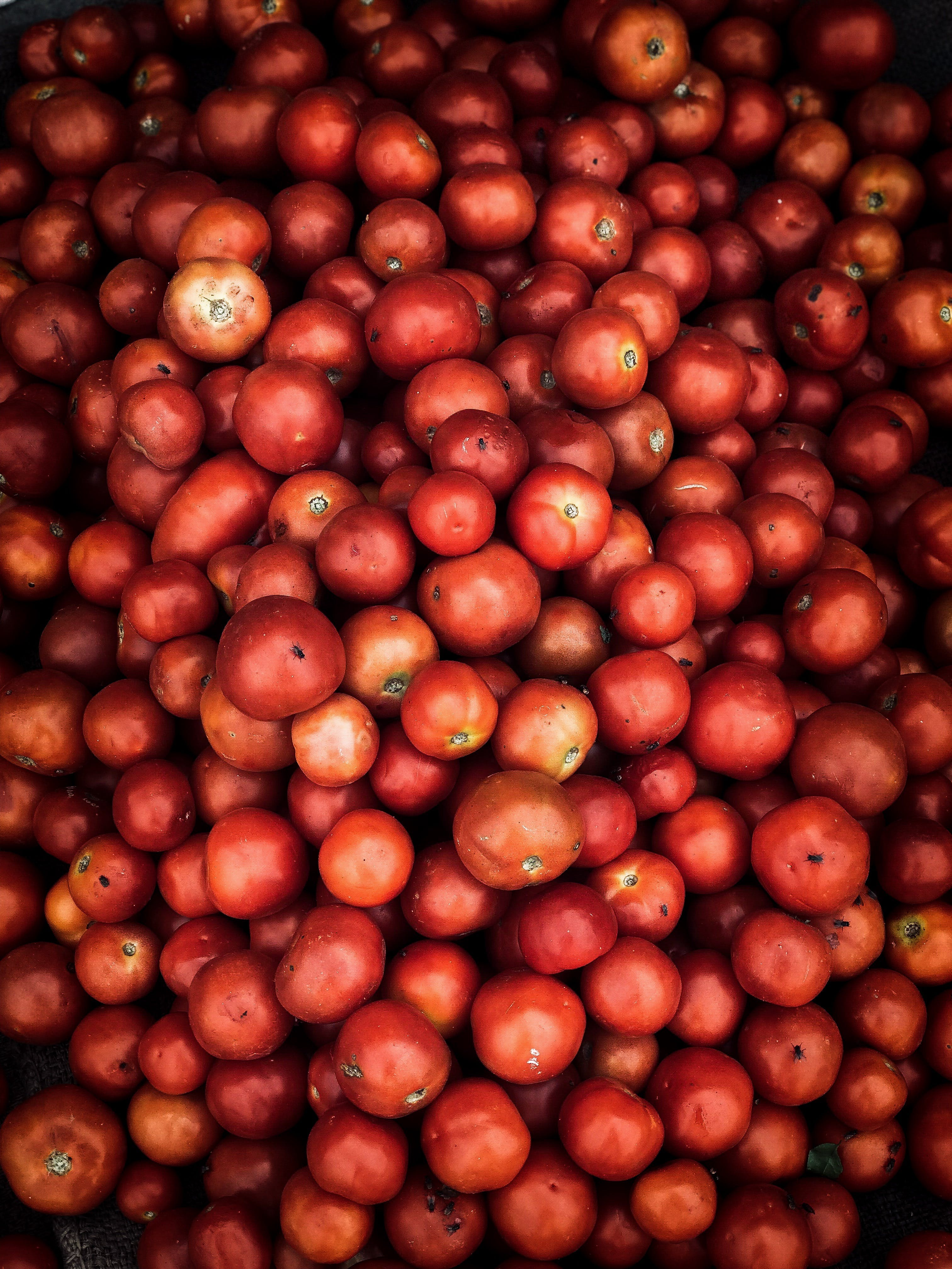 Red Round Fruits Lot
