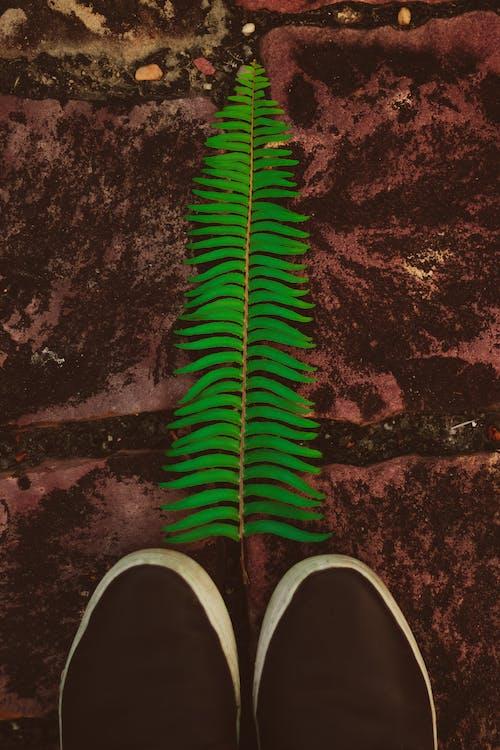 Free stock photo of chao, folhas, nature