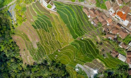 Luftbildfotografie Von Grünen Bäumen