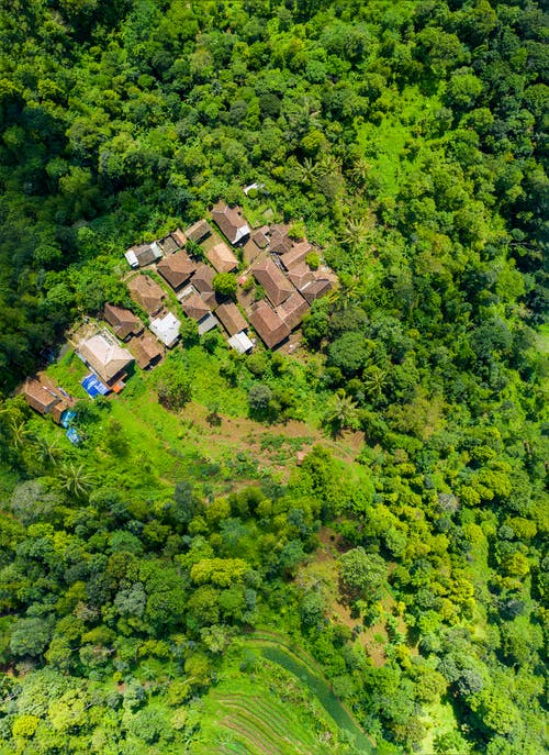 Aerial View Photography of Brown Houses Surrounded by Trees