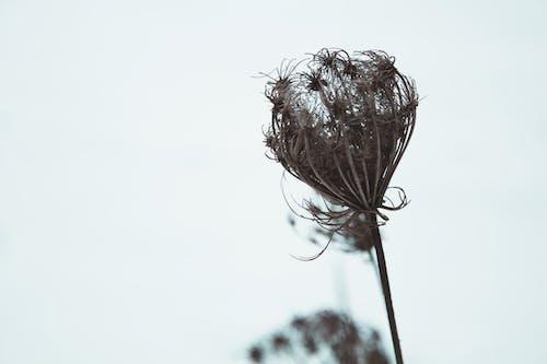 Imagine de stoc gratuită din arid, frunze uscate, natură, plantă