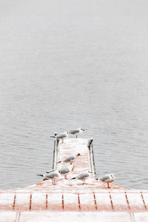 Seven Gray Birds on Brown Dock Near Body of Water
