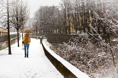 Fotobanka sbezplatnými fotkami na tému cesta, chladný, človek, dáždnik
