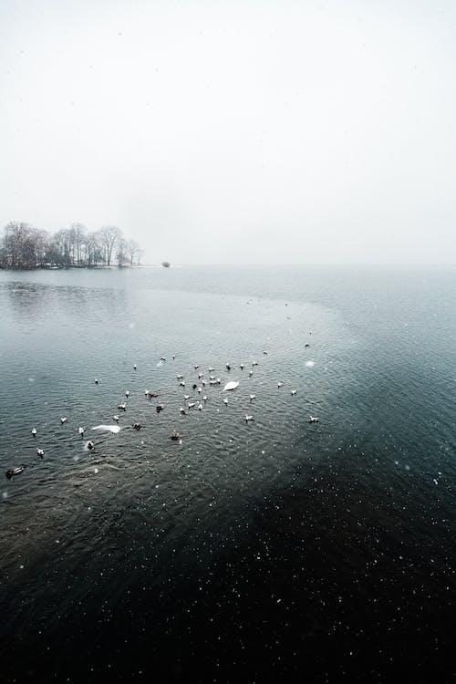 Darmowe zdjęcie z galerii z czarno-biały, drzewa, dzień, jezioro