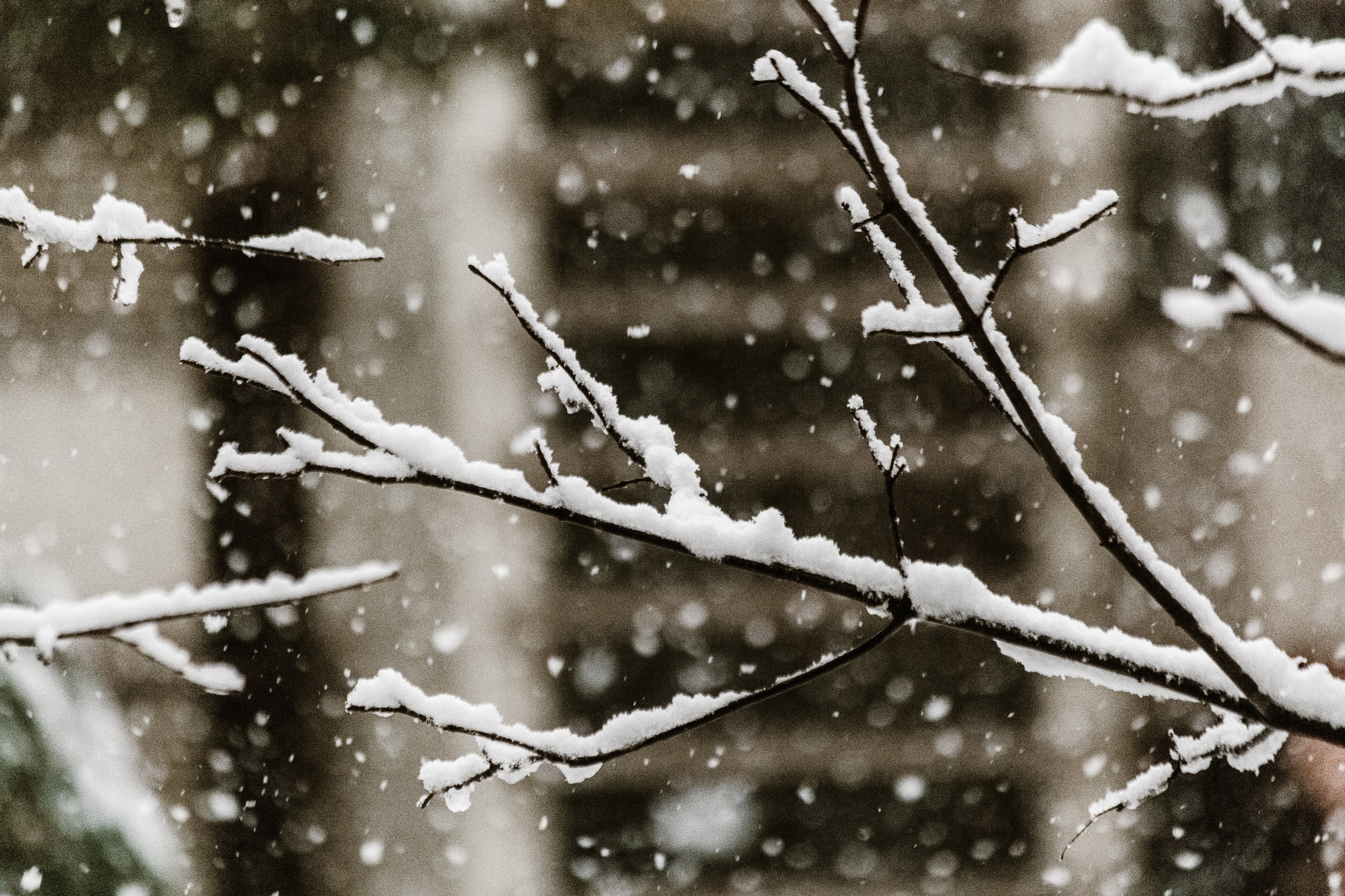 Close-Up Photo of Snow Falling on Tree Branches