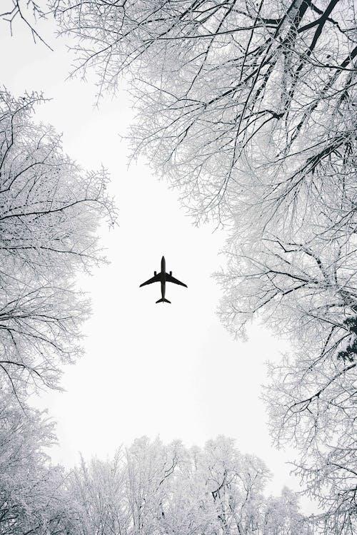 Darmowe zdjęcie z galerii z czarno-biały, drzewa, dzień, gałęzie