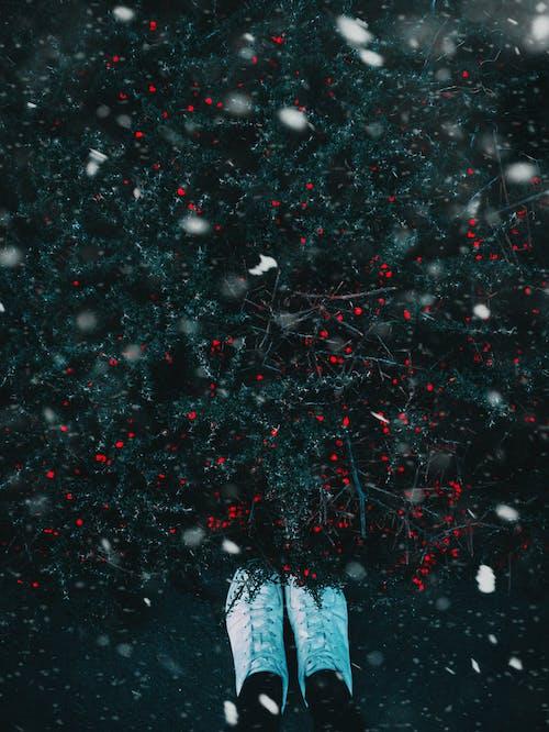 Immagine gratuita di albero, ambiente, bianco, freddo