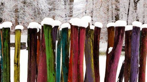 Foto d'estoc gratuïta de color, colorit, detalls de fusta, fons de colors