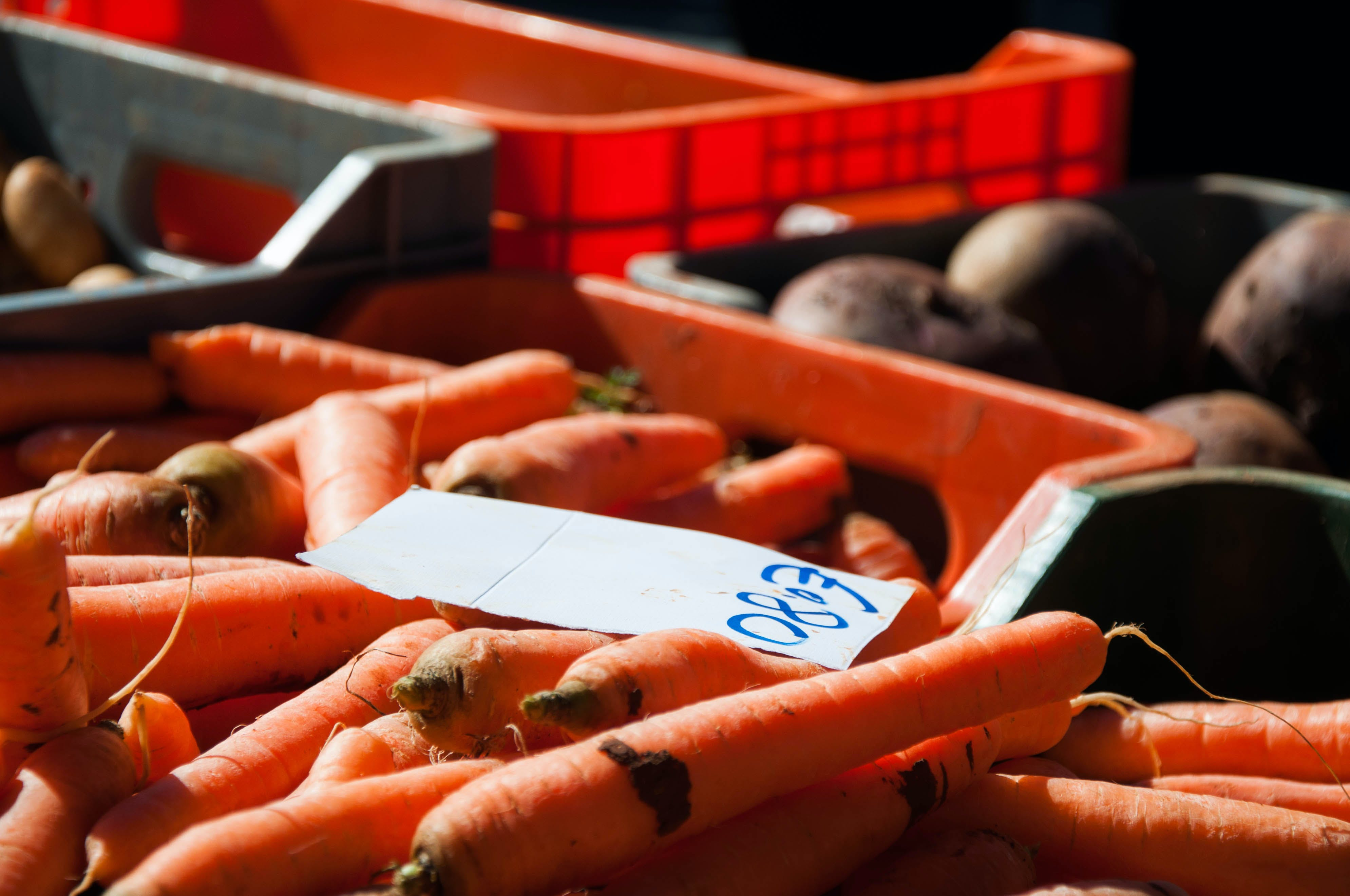 Free stock photo of carrots, farmers market, morning sun, orange