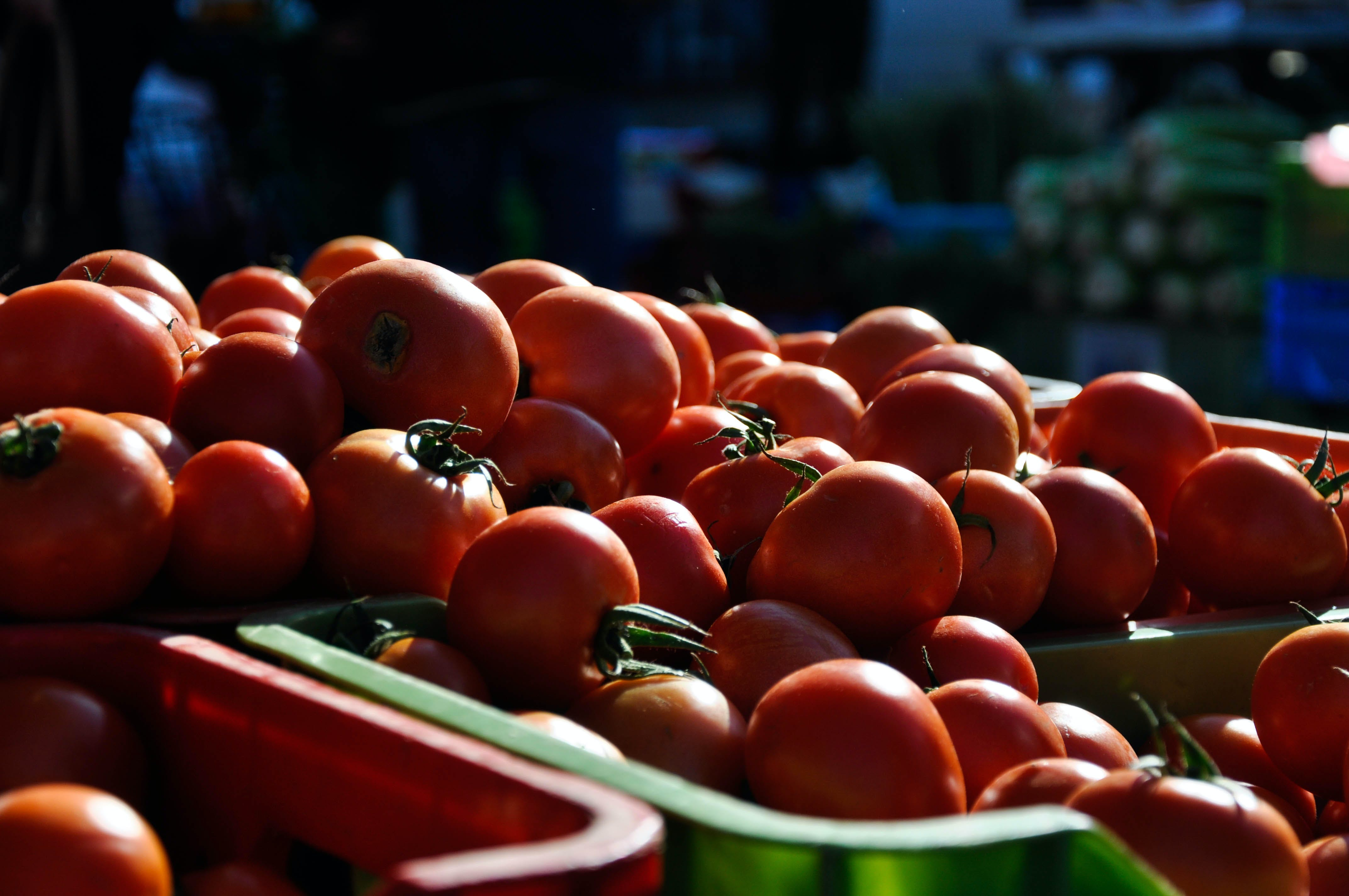 Free stock photo of farmers market, morning sun, tomatoes