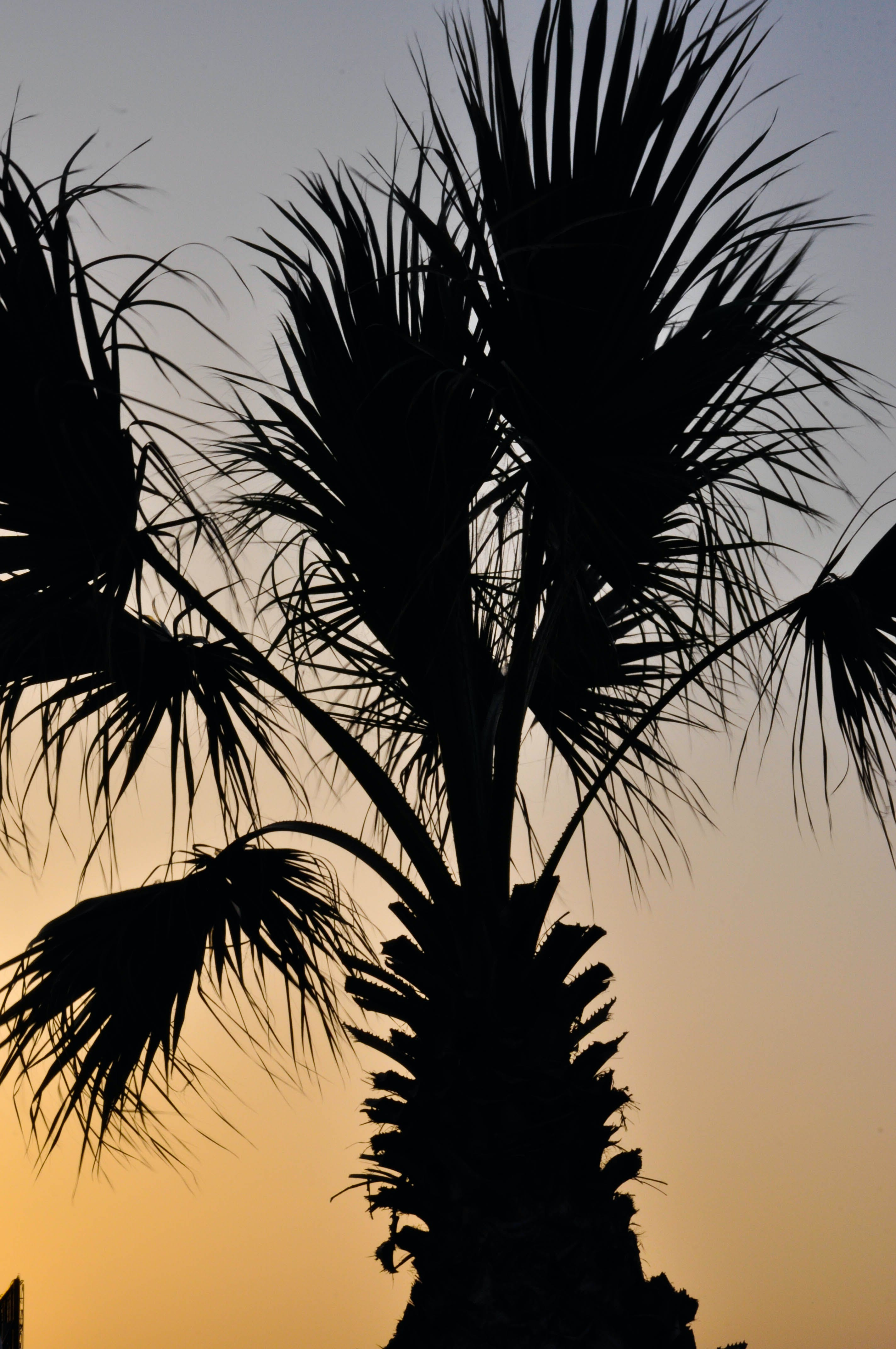 Free stock photo of beach, palm tree, sunset, tropical