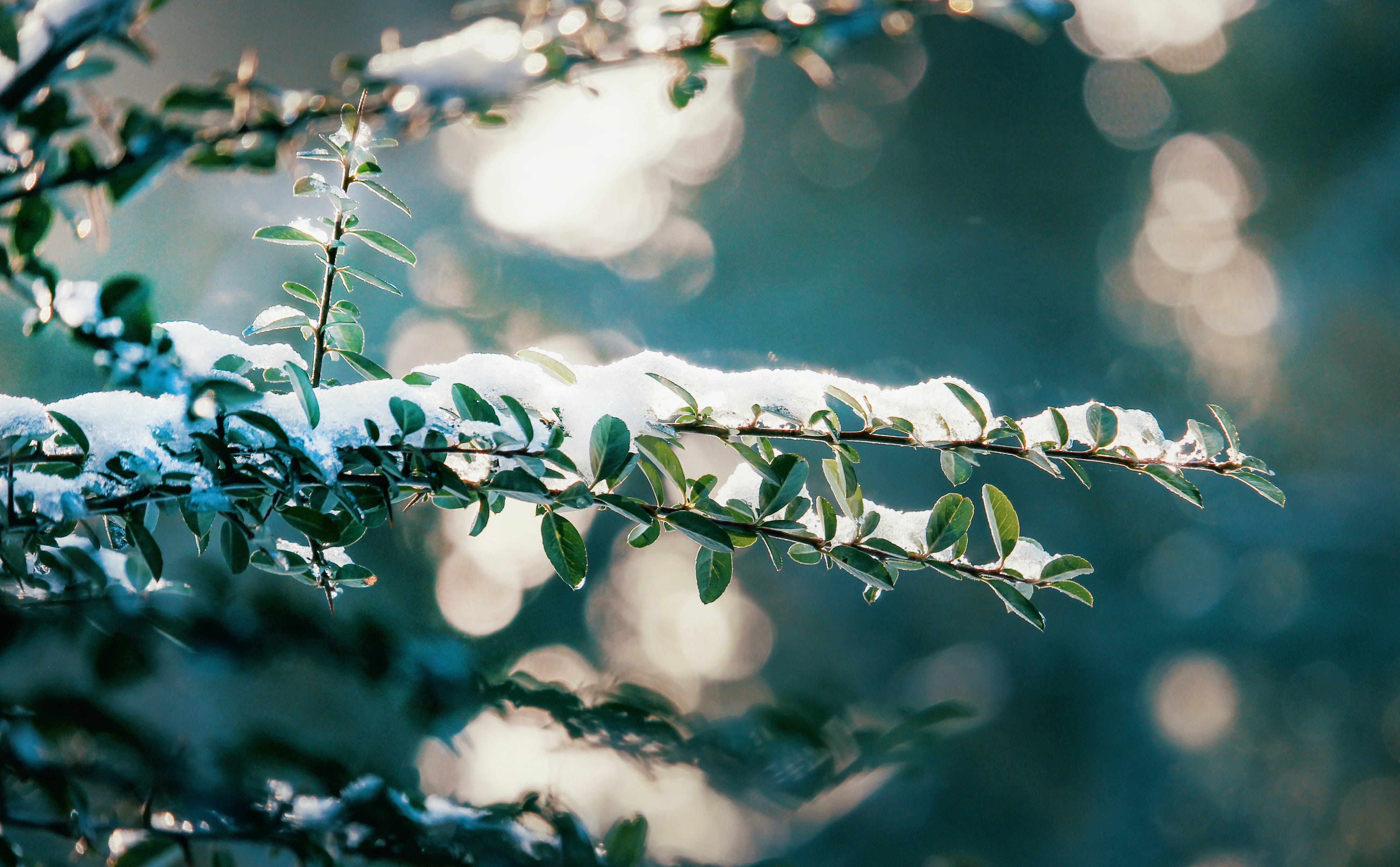 コールド, 光, 冬