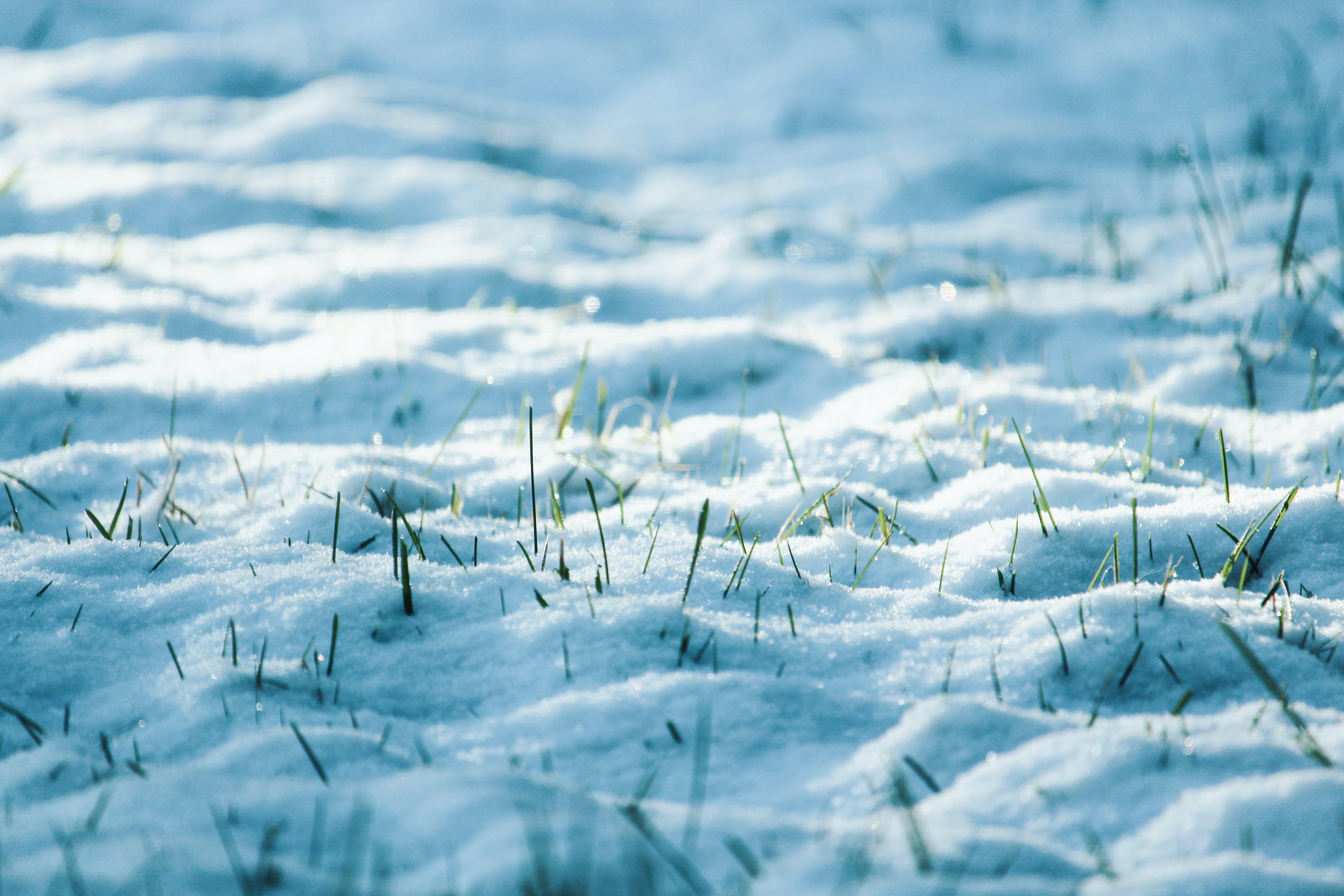 Close-Up Photo of Snow