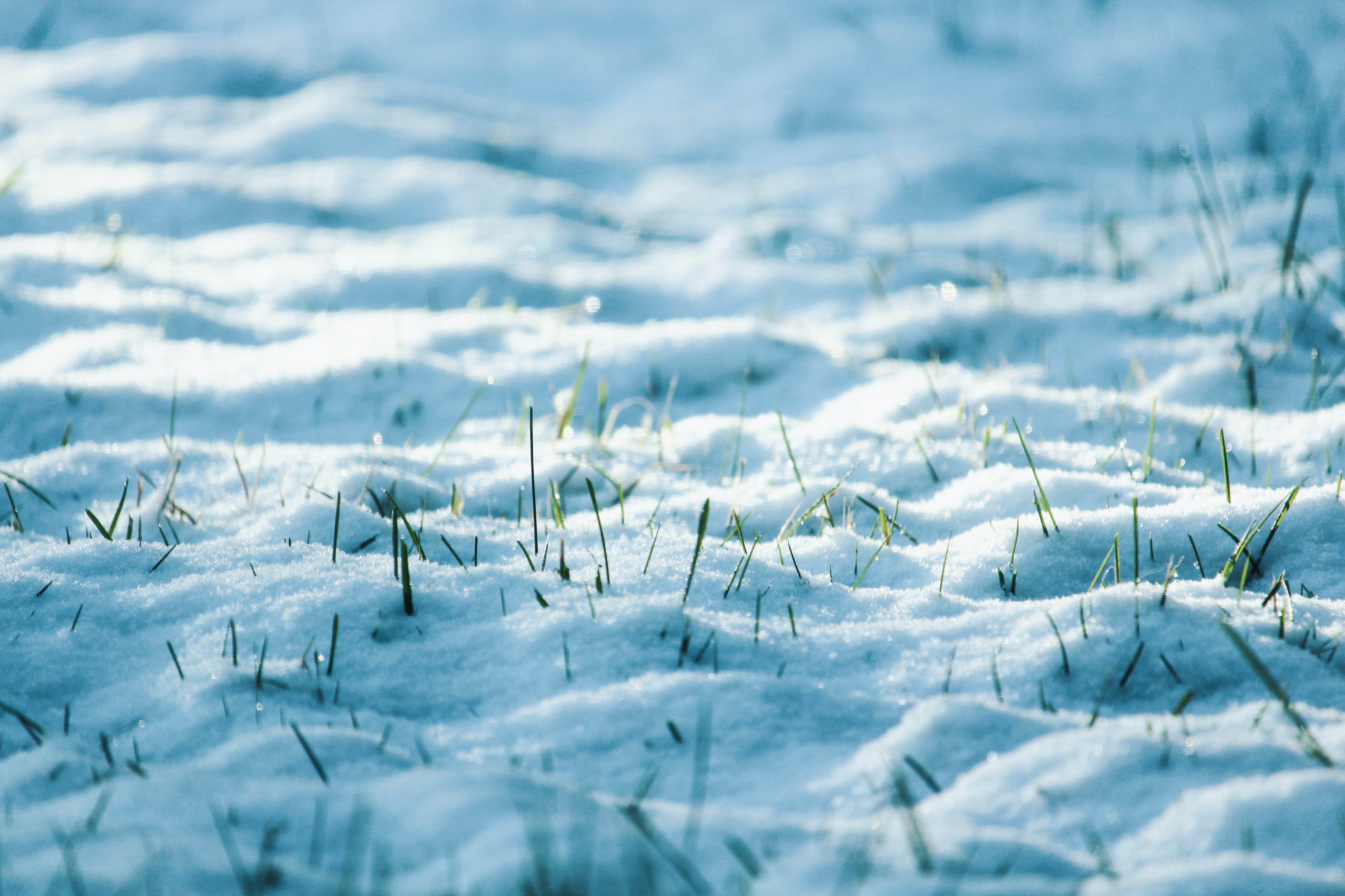 Close-Up Photo of Snow
