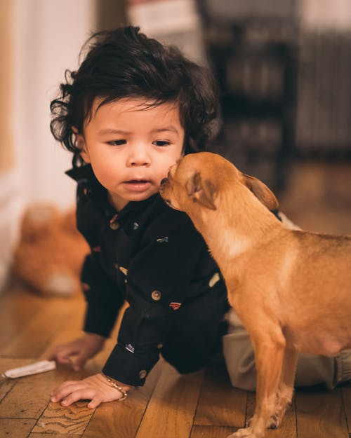 Dog Looking at Toddler