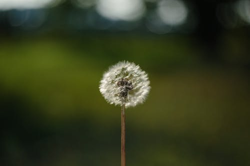 Kostenloses Stock Foto zu blume, draussen, farbe, flora
