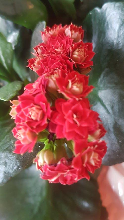 Foto profissional grátis de # flor # natureza #redplant