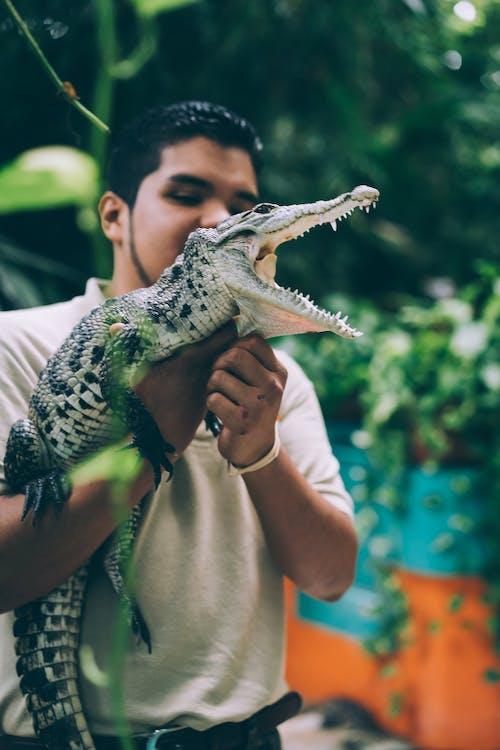 Kostnadsfri bild av alligator, djur, djurpark, man