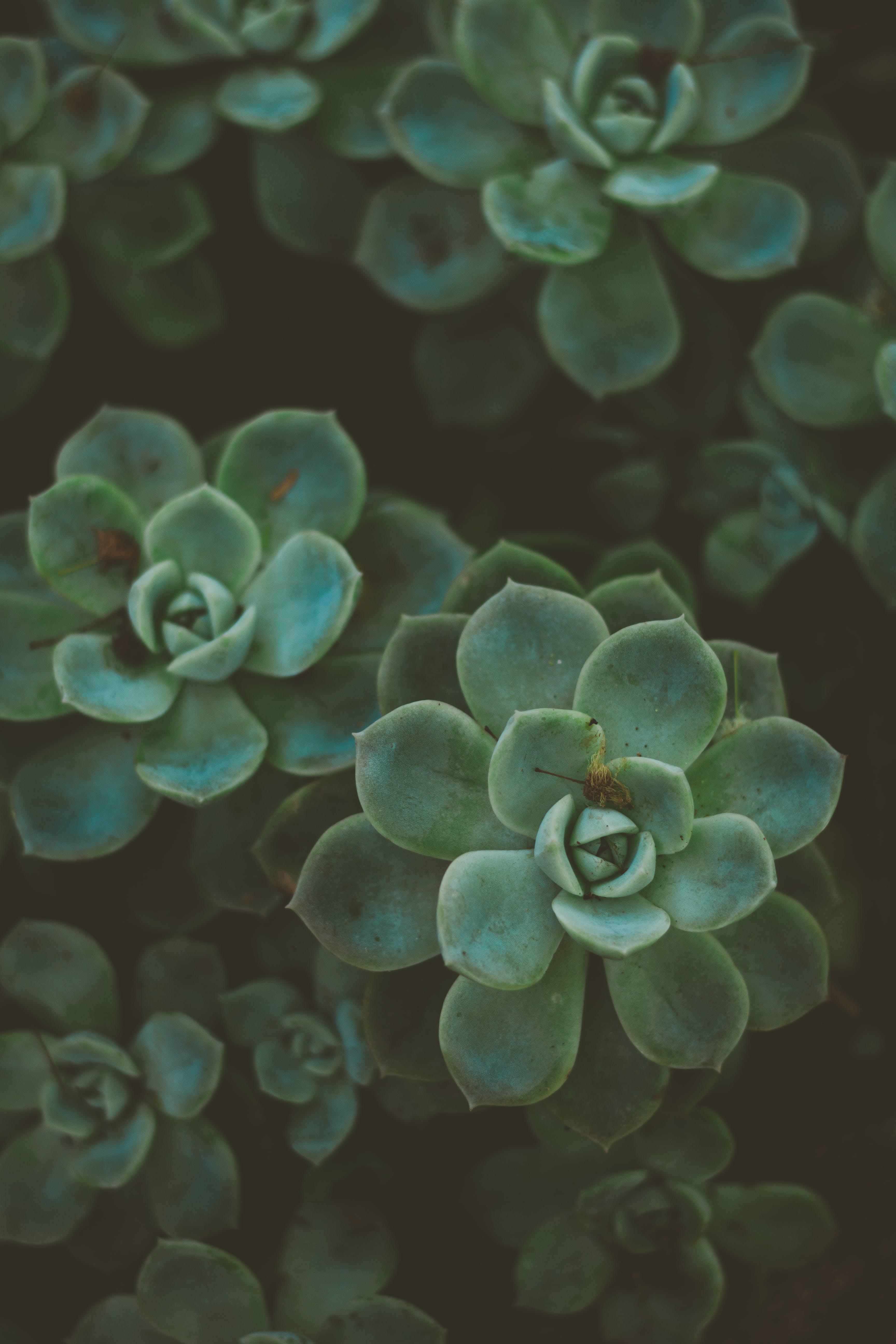 ぼかし, パターン, フォーカス, ボタニカルの無料の写真素材
