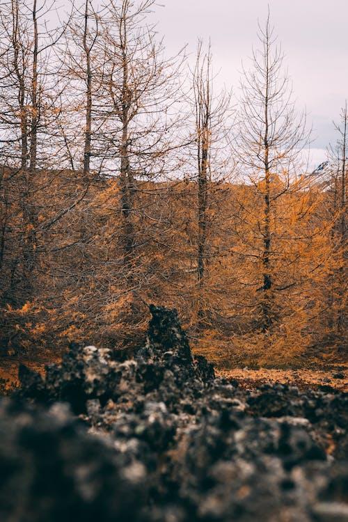 Foto stok gratis alam, Fajar, indah, lansekap