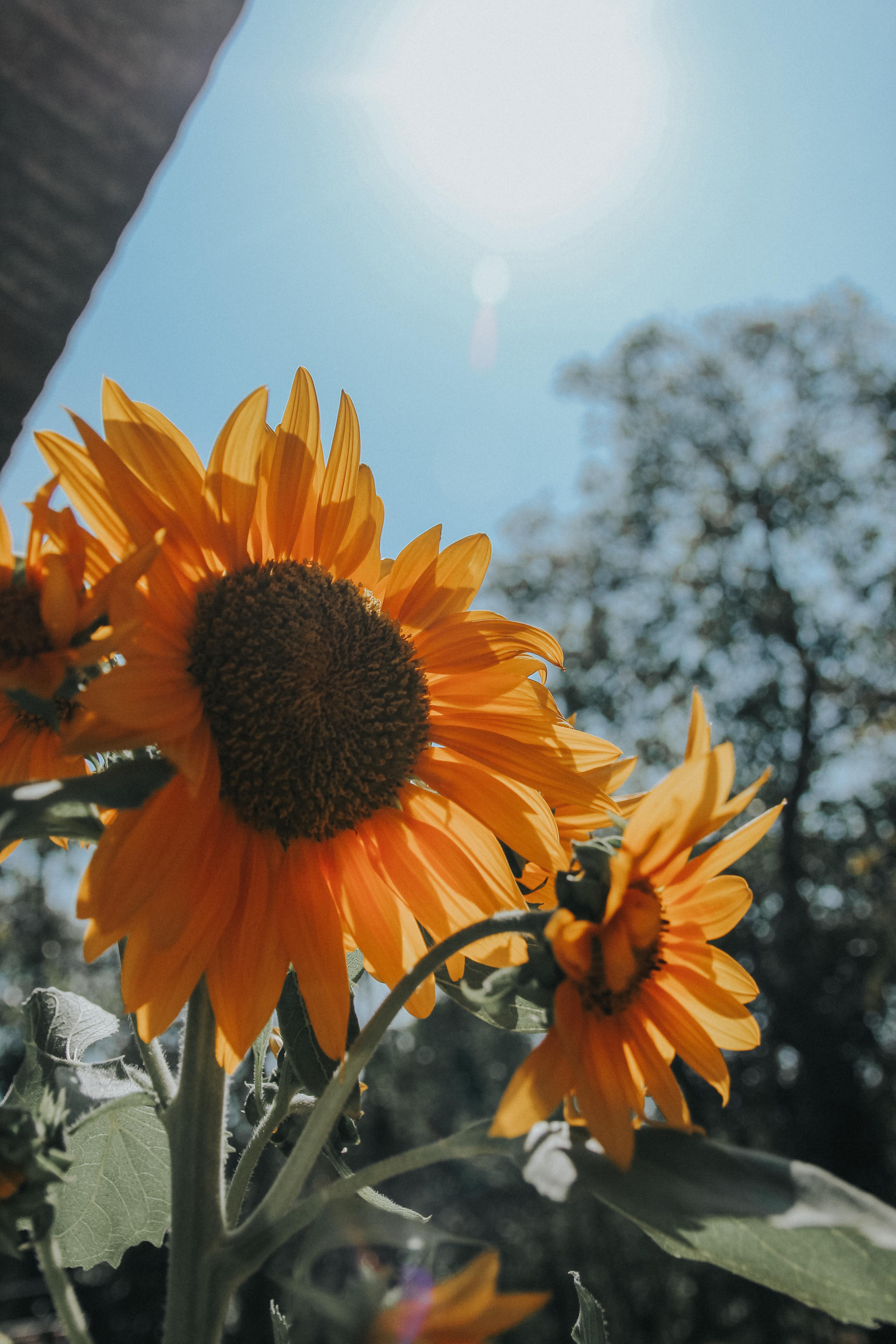 Foto Stok Gratis Tentang Bagus Buket Bunga