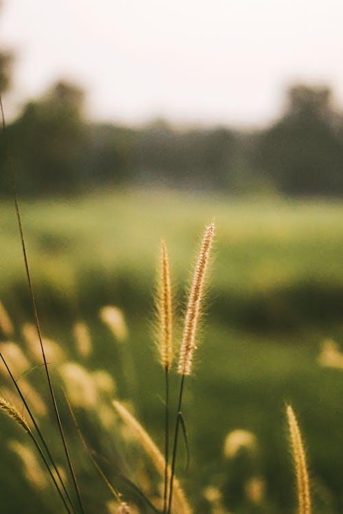altın rengi Güneş, çiçek, doğa
