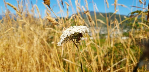 夏天, 白色的花, 美麗的花, 美麗的花朵 的 免費圖庫相片