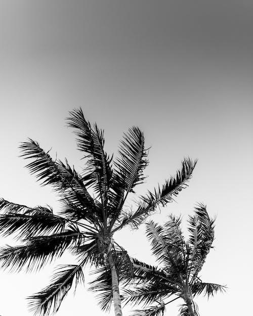 Безкоштовне стокове фото на тему «бриз, відтінки сірого, вітер, вітряний»