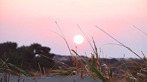 Free stock photo of beach, nature, sunset