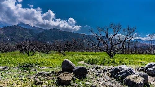 乾枯, 夏天, 天性, 山 的 免費圖庫相片