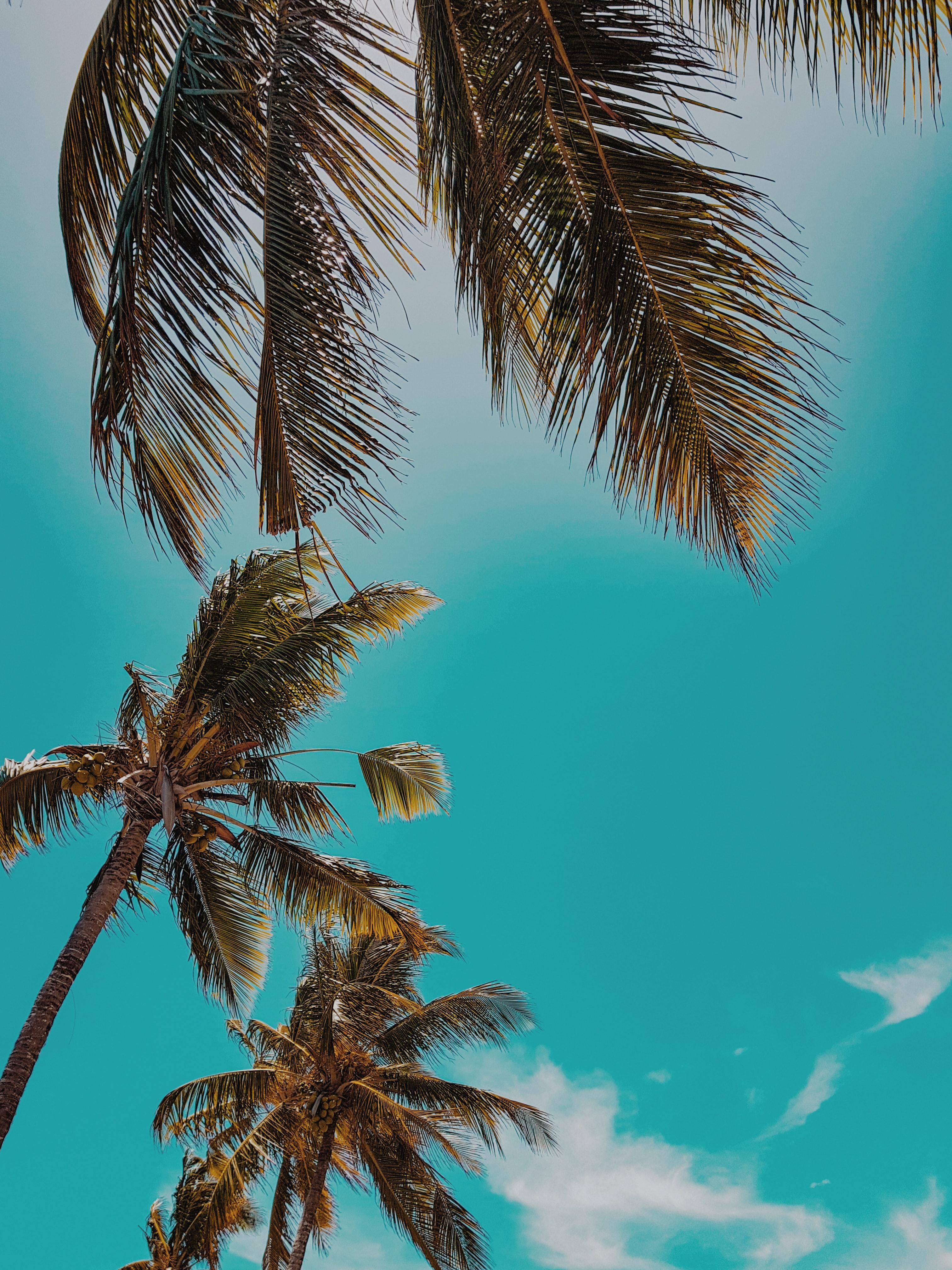 pexels photo 1869961.jpeg?cs=srgb&dl=alam bidikan sudut sempit cerah 1869961