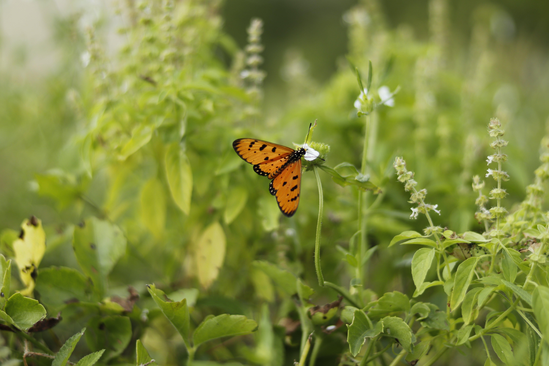 Free stock photo of beauty in nature, butterfly, desktop, desktop background