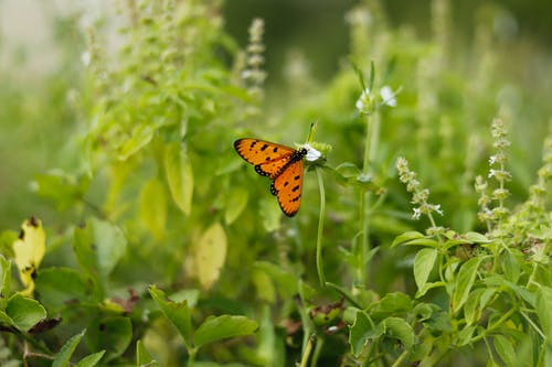 Free stock photo of beauty in nature, butterfly, desktop