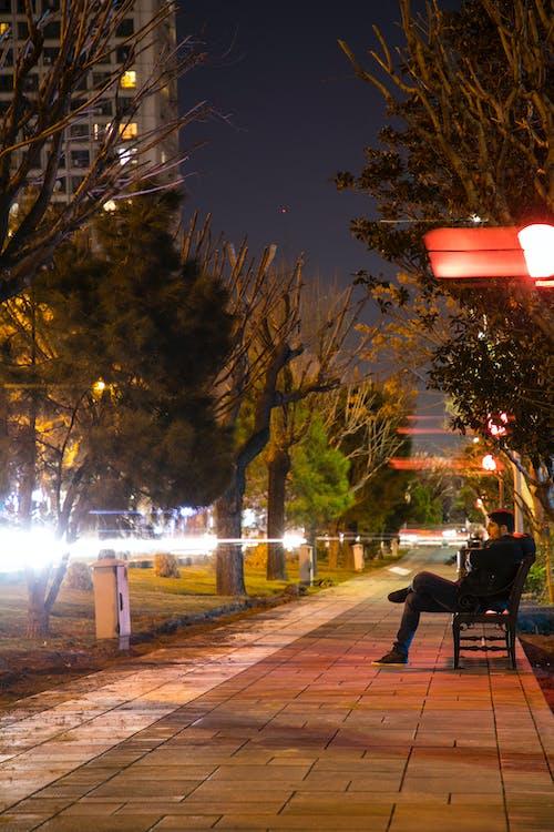 chaises longues, parc, transats