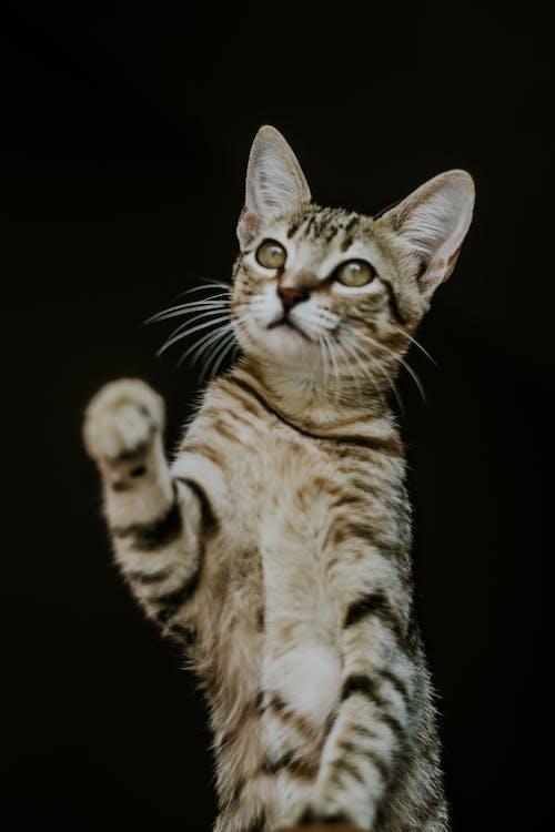 Fotobanka sbezplatnými fotkami na tému cicavec, čierne pozadie, detailný záber, domáce zviera