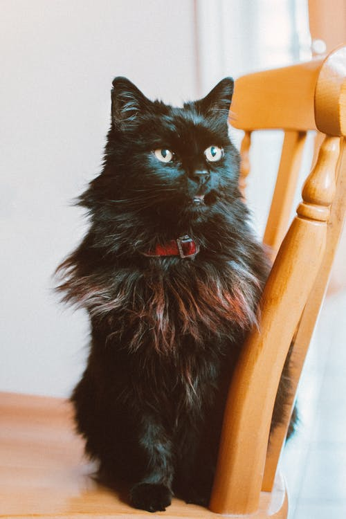 Základová fotografie zdarma na téma dívání, domácí mazlíček, kočka, koťátko