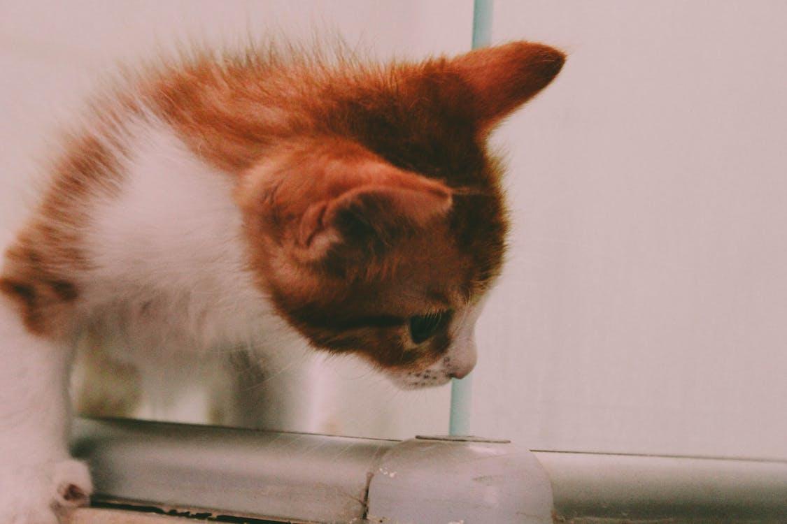 #gato