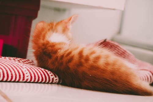 Fotobanka sbezplatnými fotkami na tému #cat