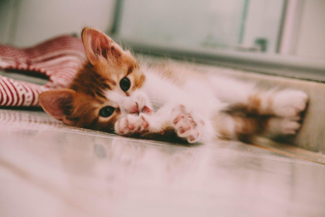 #katt
