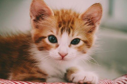 #고양이의 무료 스톡 사진