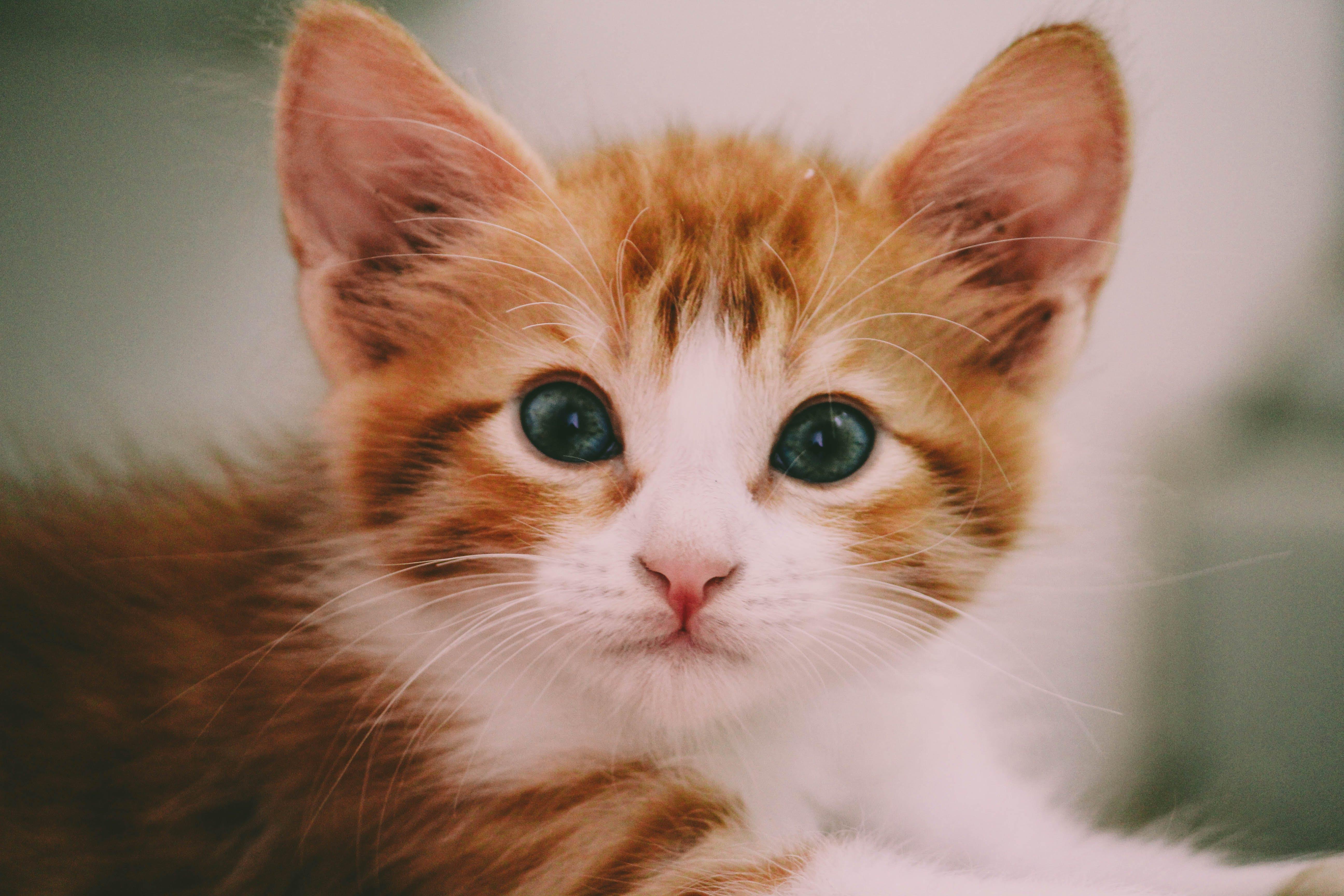 Free stock photo of #cat