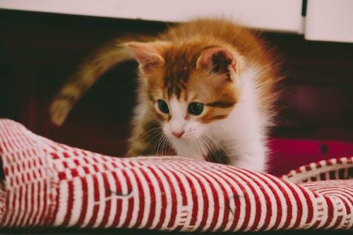 Základová fotografie zdarma na téma #kočka