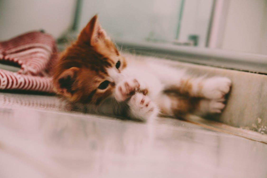 #kedi