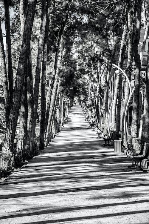 Darmowe zdjęcie z galerii z ciemny, czarno-biały, park, smutny
