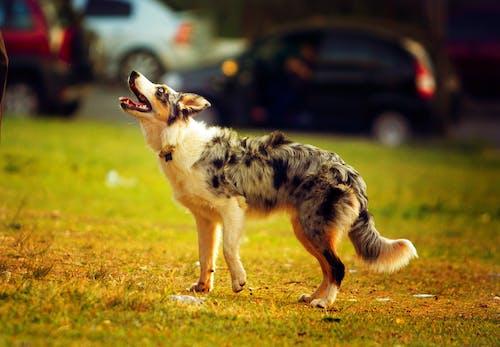 Selektives Fokusfoto Eines Hundes