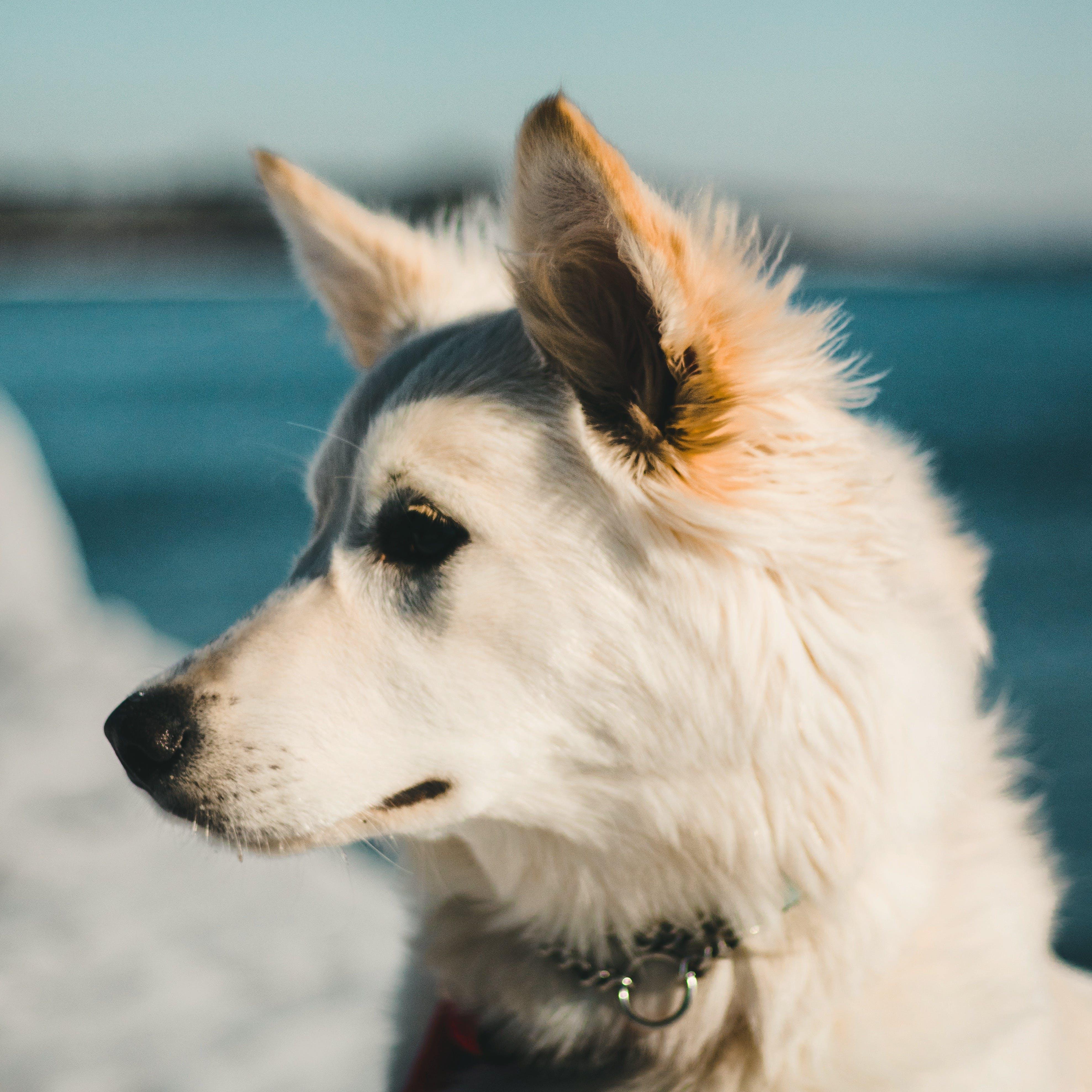 Free stock photo of adventure, dog, Lake Ontario, puppy