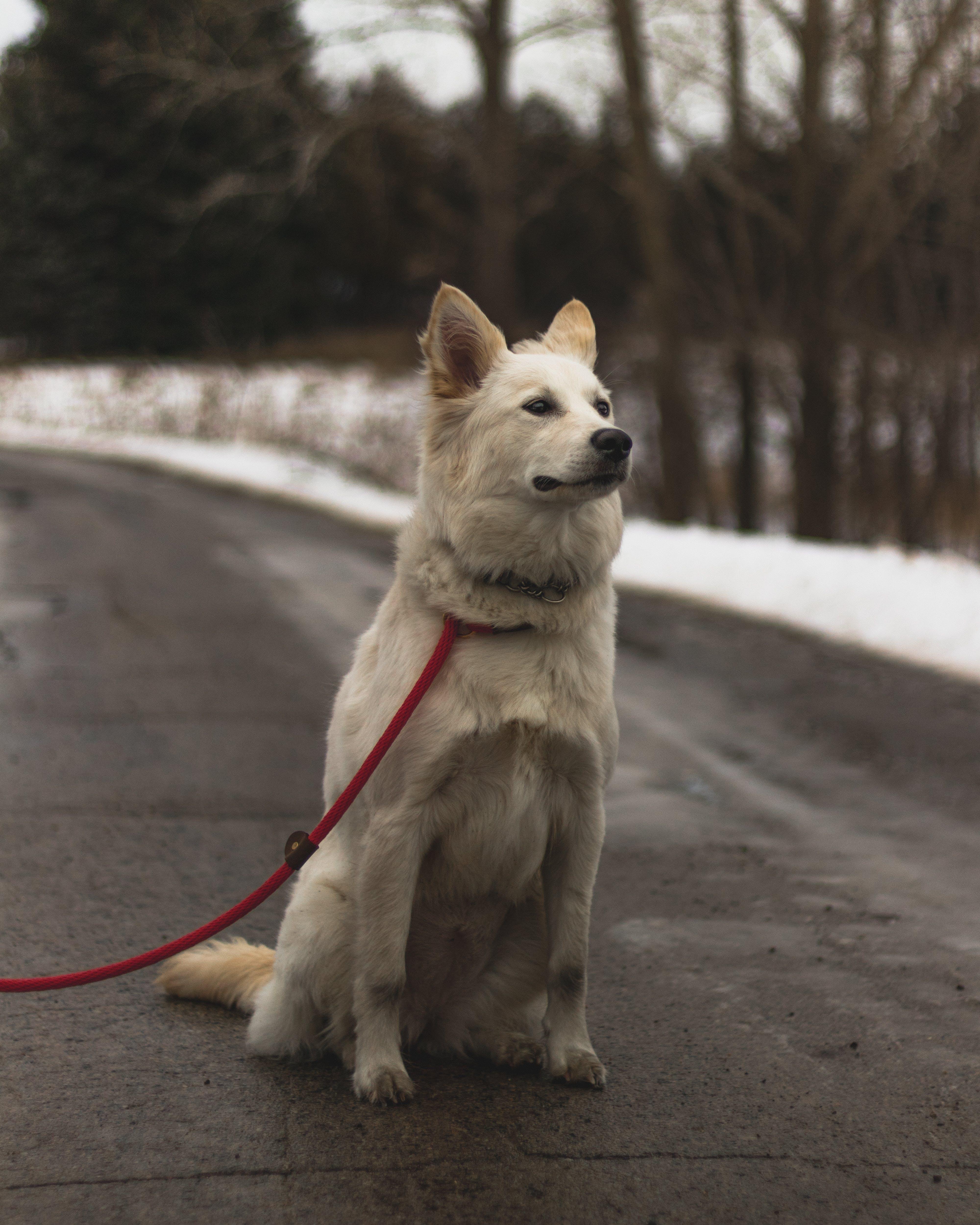 Free stock photo of adventure, dog, puppy, sitting